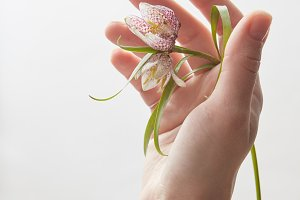 Hand with flower over white