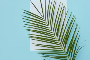 Palm branch covering empty space