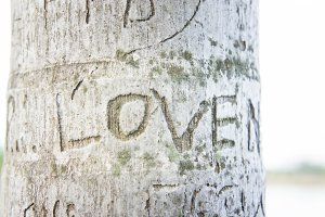 Tree carvings etched the word love