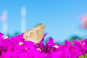 Butterflies with pink flowers