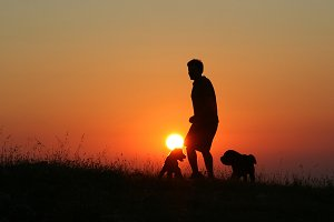 Man and dogs at sunset