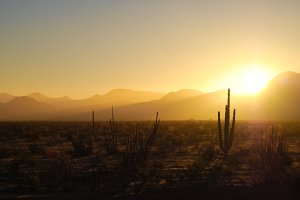 Sunrise Over the Desert