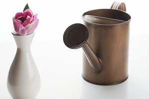 Watering can next to a flower in a vase on white background. Isolated. Gardening.