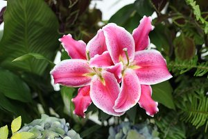 Tropical Flower | Conservatory