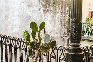 Cactus in a Vintage Balaustrade