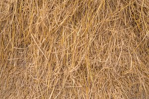 Straw texture for background.