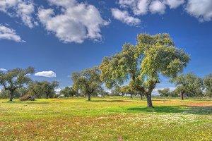 Spring landscape meadow.