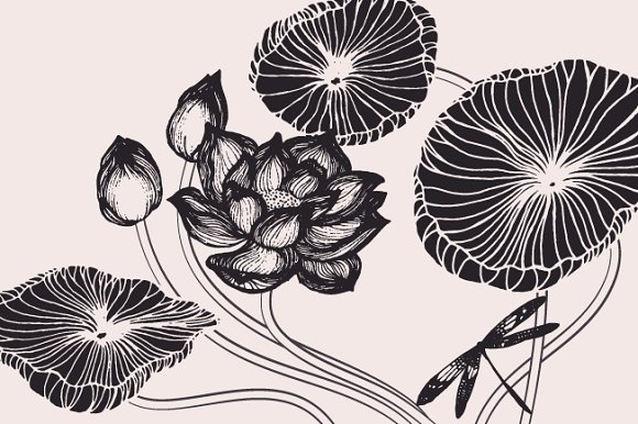 Lotus flowers leaves drawings illustrations creative market lotus flowers leaves drawings illustrations mightylinksfo