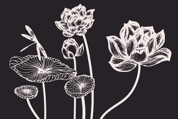 Lotus Flowers & Leaves Drawings ~ Illustrations ~ Creative Market