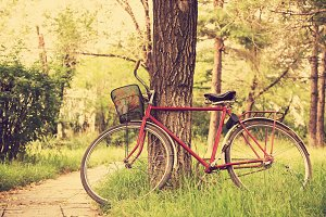Vintage bicycle near tree