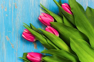 Pink tulips on blue table