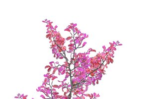 Colorful Leaves Tree Branch Isolated Photo