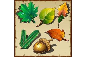 Set of leaves from different trees, six icons