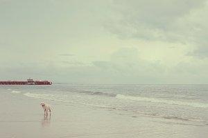 A dog on sand beach