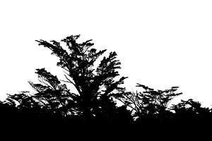 Isolated Forest Tree Silhouette in white Background