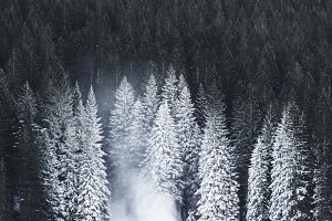 Dark Forest with snowy pine Trees