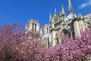 Notre Dame Cathedral in April