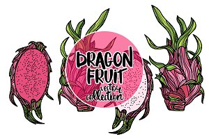 Dragon fruit vector collection.