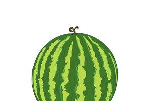 watermelon in sketch style, vector