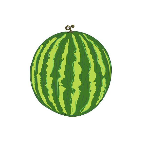 Watermelon In Sketch Style Vector