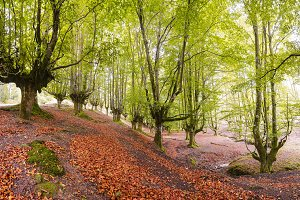 Landscape fall forest, autumn