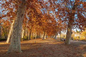 Trees in a park in autumn
