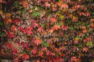 Wall of Autumn Leaves