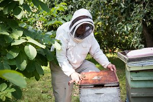 Beekeeper cleaning the bee frame