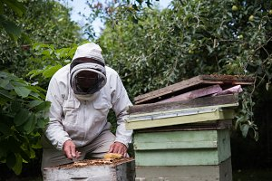 Beekeeper removing honeycomb from beehive