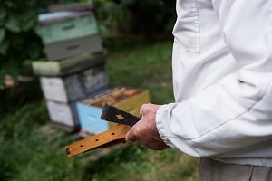 Beekeeper holding the beehive in wooden frame in apiary garden