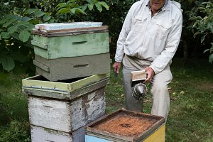 Beekeeper working with a smoker in apiary garden