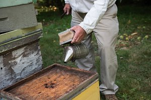 Beekeeper working with a smoker