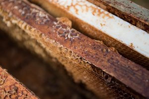 Honeycomb in a wooden box