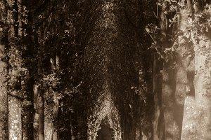 Tree Covered Lane