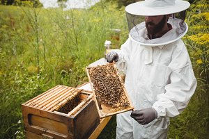 Beekeeper holding and examining beehive