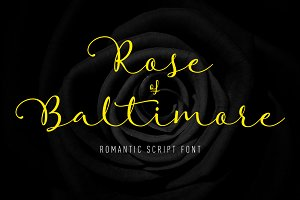 Rose of Baltimore