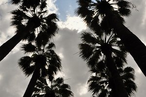 Palm Trees Silhouette