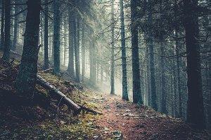 Trail in a dark pine forest