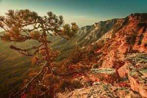 Pine tree on top of the mountain