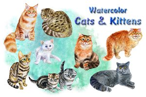 Cats and Kittens. Watercolor