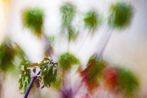 Bokeh with wild plants