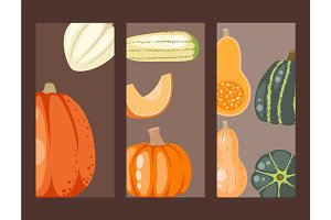 Fresh orange pumpkin cards decorative seasonal ripe food organic healthy vegetarian vegetable vector