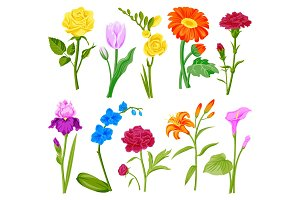 Beautiful watercolor flower set handmade style illustration isolated on white