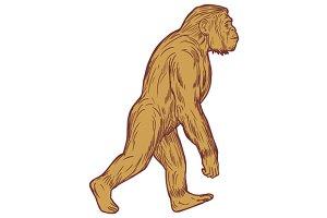 Homo Habilis Walking Side Drawing