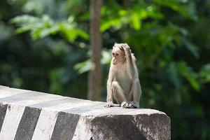 Monkey in India (7 photos)