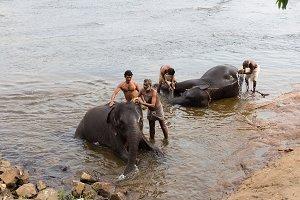 Elephant washing in India (13)