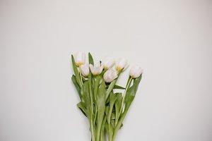 Tulips on white minimalistic background