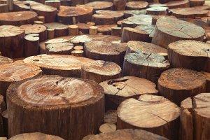 Old teak wood stumps