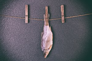 fish hanging on the rope