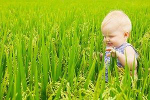 Little child walks in the rice field